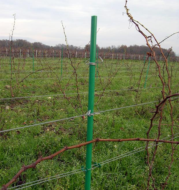 piquet de vigne